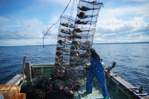 Umioka Seafood Processing